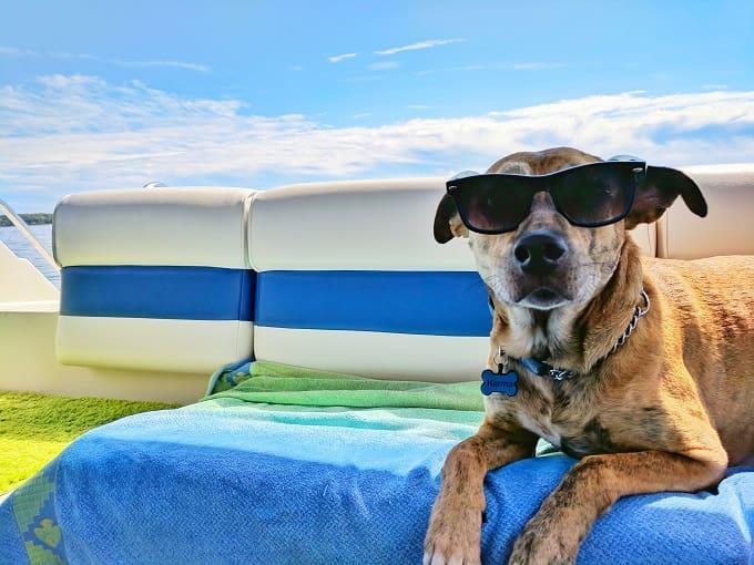 夏の青空の下で犬がサングラスをしてこっちを見る様子のアイキャッチ画像