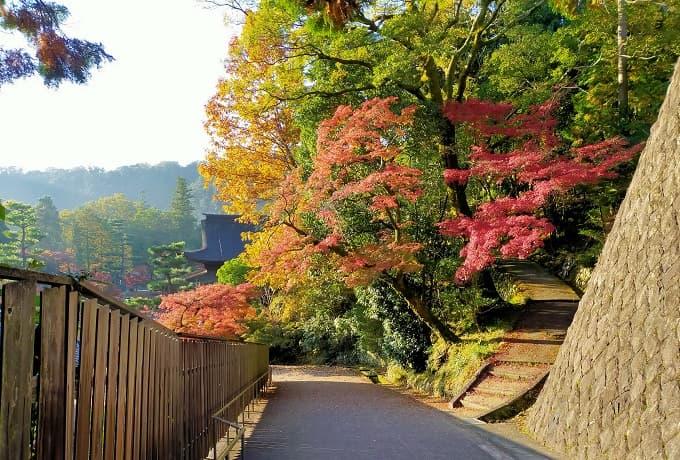 永保寺庭園の紅葉写真