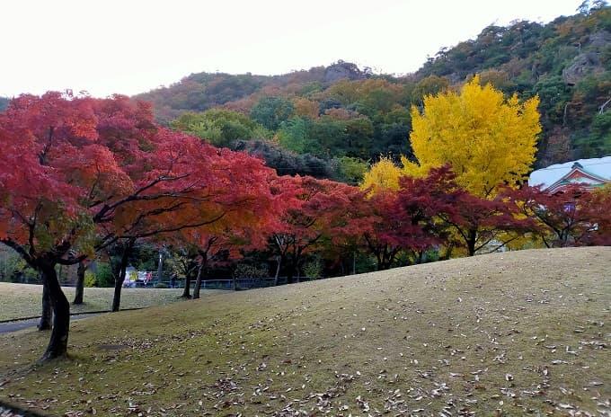 岩戸公園の紅葉写真