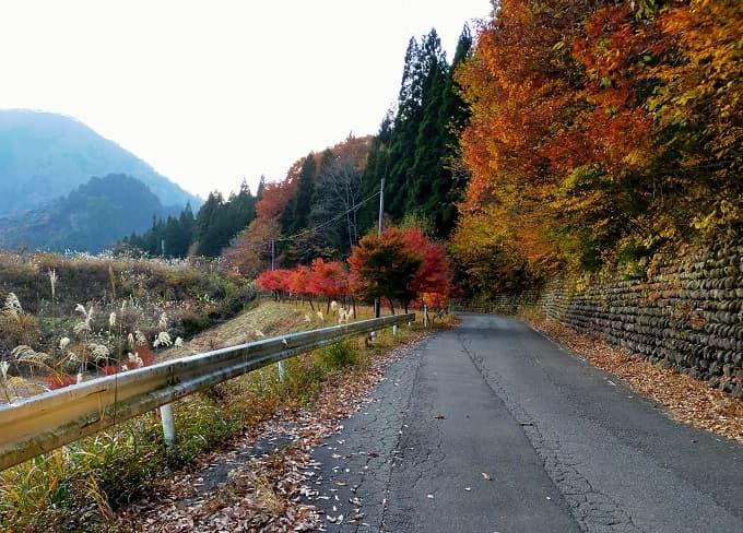 川浦渓谷への道路写真