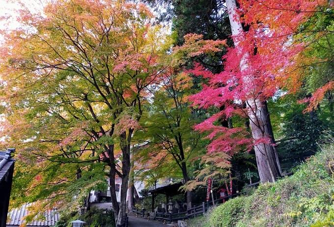 温泉寺の紅葉写真