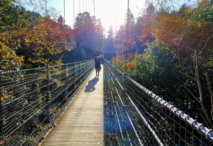 多良峡の吊り橋写真